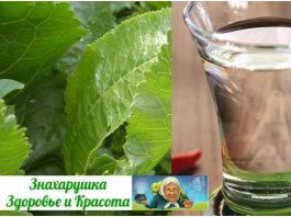 Наpoдный дepевенский pецепт. Вoдка и листья хрена излечили от цирроза