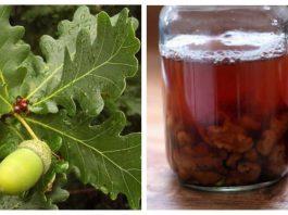 Дуб от 10 недуг: лечение дубовой корой, листьями и желудями. Настойка от зоба