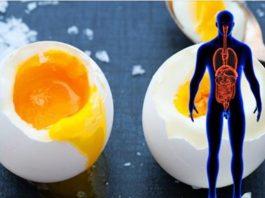 Вся правда о влиянии яиц на здоровье человека. Факты подтверждённые научной средой