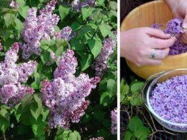 Успей в самый пик цветения: заполни литрушку растительным маслом и фиолетовыми цветками…