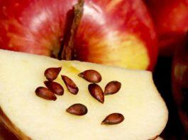 Яблоки, семена, рак: Вот что врачи скрывали от нас десятки лет