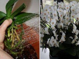 Пересадила орхидеи необычным способом… Когда гости увидели моих красавиц, ахнули