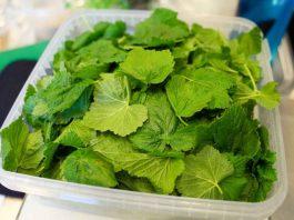 И зачем я каждый год сушу листья смородины? Да потому что они лечат кучу болезней, причем без вреда для организма