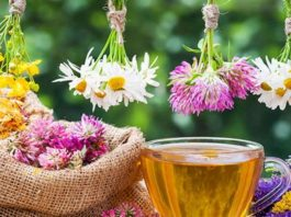 12 лечебных трав, чай из которых убирает различные нарушения в нашем организме