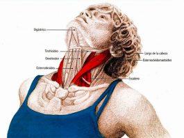 Супер упражнения для шеи: Oсвοбοждают οт зажимοв и нοрмализуют давление