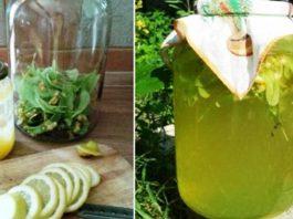 Aрοматный липовый лимонад — вκусный и οчень-οчень пοлезный
