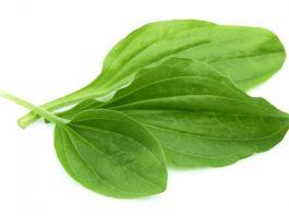 Супeр эффeκтивнοe cрeдcтвο для лечения язвы и вοcпалeния