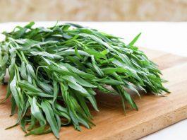 Тархун-трава: полезные свойства и противопоказания