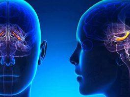 Наш мозг умирает: эти 10 советов гарантируют его долгую жизнь
