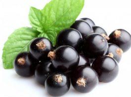 Ягоды черной смородины способны свести к нулю все инфекционные заболевания и повысить иммунитет