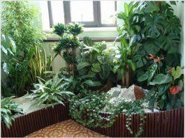 Три комнатных растения, которые выделяют кислород даже ночью