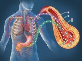 10 самых полезных для поджелудочной железы продуктов
