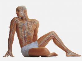 Омоложение эндокринной системы — ЧТО ВАЖНО ЗНАТЬ