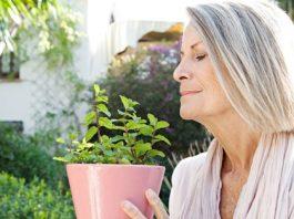 4 травы, которые защищают от болезни Альцгеймера, депрессии и тревоги