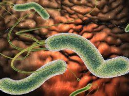 Как избавиться от бактерии, которая вызывает у Вас вздутие живота, изжогу, рефлюкс, диарею и другие симптомы