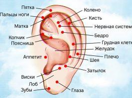 Как правильно делать массаж ушей