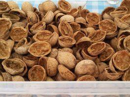 Зачем собирать скорлупу от грецких орехов в пакет