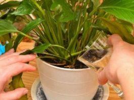 Простое средство, которое сотворит чудо даже с самыми худыми растениями