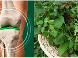 Смесь 4 трав создаёт мощное средство для регенерации хрящей коленей и бедра